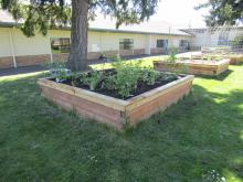 Raised Gardens with vegetables growing.